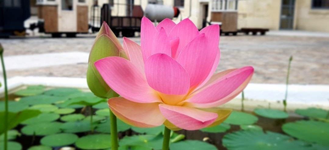 1ère Fête des Plantes et mobilier de jardin au Village du Livre le Samedi 11 Mai 2019